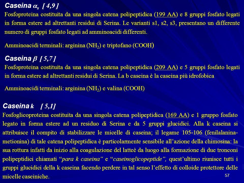 Caseina as [ 4,9 ] Caseina b [ 5,7 ] Caseina k [ 5,1]